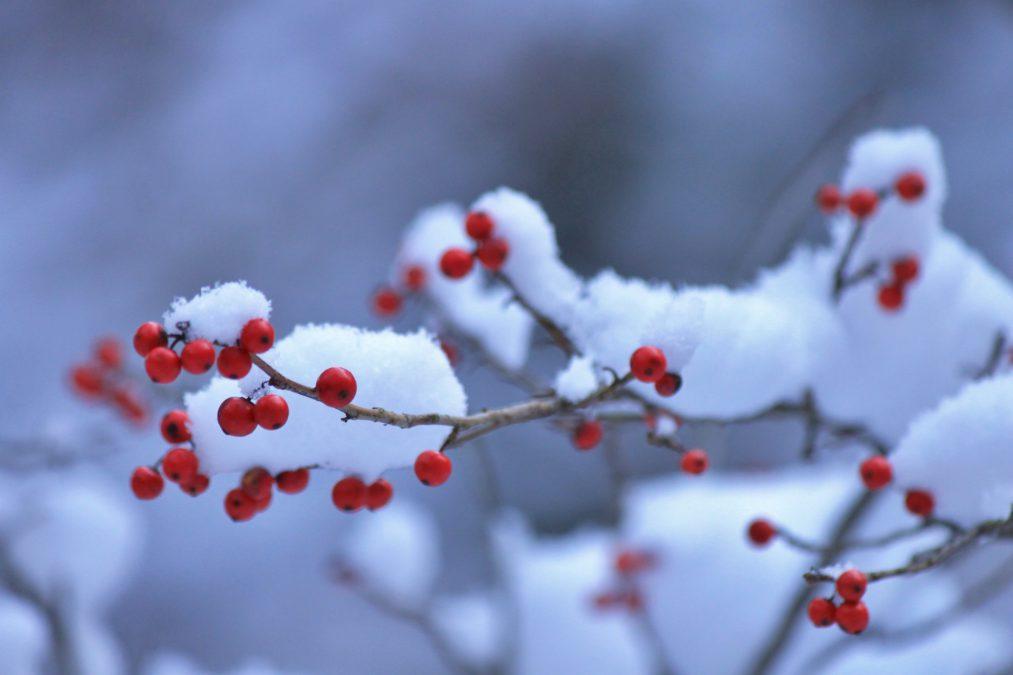 12月休業日、年末年始の営業日のお知らせ